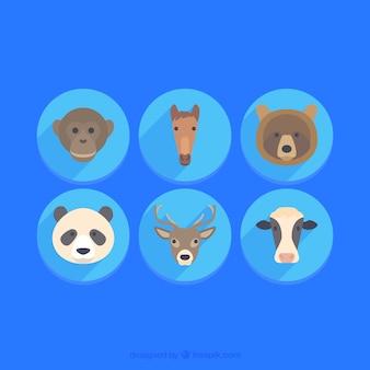 Coleção animal cara
