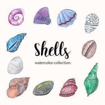 Coleção aquarela de conchas