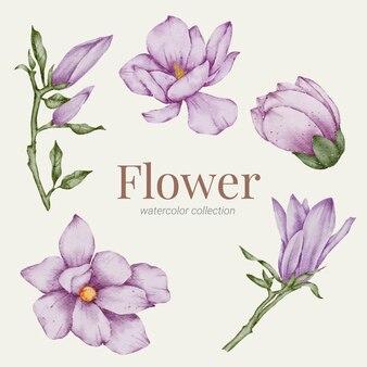 Coleção aquarela de elementos florais