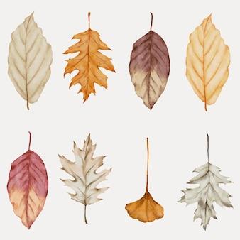 Coleção aquarela de folhas de outono