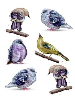Coleção aquarela de pássaros bonitos