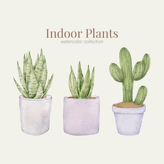 Coleção aquarela de plantas de interior