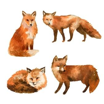 Coleção aquarela raposa