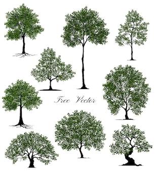Coleção bela árvore realista sobre um fundo branco