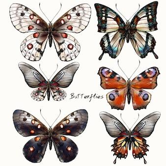 Coleção bonita de borboletas