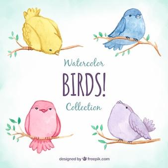 Coleção bonito de pássaros de aquarela