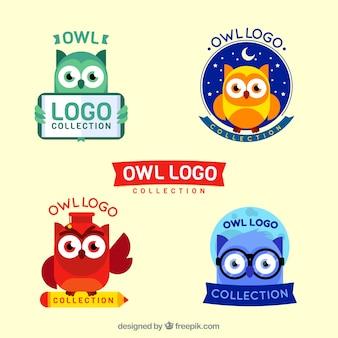 Coleção colorida do logotipo da coruja