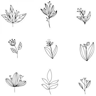 Coleção conjunto samambaia floresta eucalipto