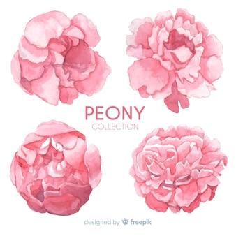 Coleção criativa de flores de peônia