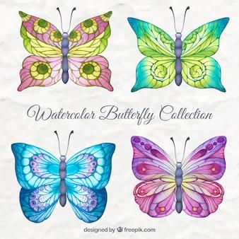 Coleção da borboleta aguarela colorida