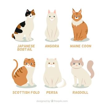 Coleção da raça do gato