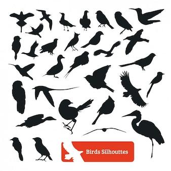 Coleção da silhueta do pássaro