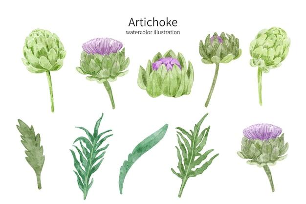 Coleção de alcachofra ilustração em aquarela floral