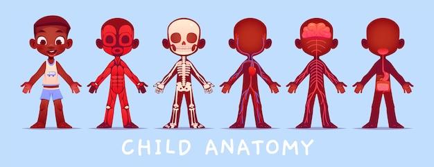 Coleção de anatomia infantil de desenho animado