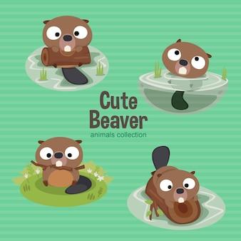 Coleção de animais beaver bonito