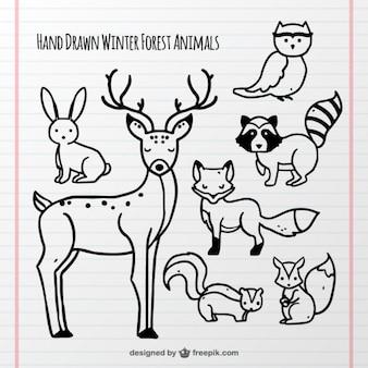 Coleção de animais da floresta desenhados à mão