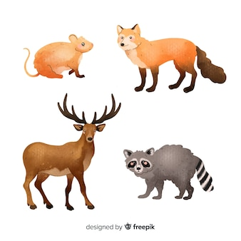 Coleção de animais da floresta em aquarela