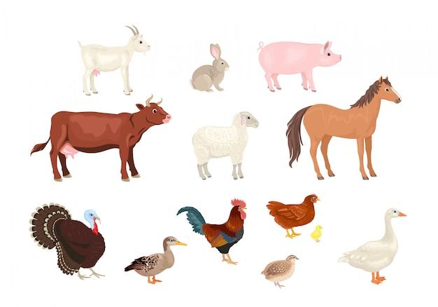 Coleção de animais e pássaros de fazenda dos desenhos animados.