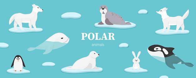 Coleção de animais marinhos polares