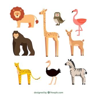 Coleção de animais selvagens exóticos