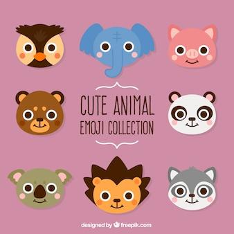 Coleção de animais selvagens