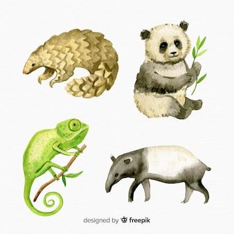 Coleção de animais tropicais exóticas em aquarela