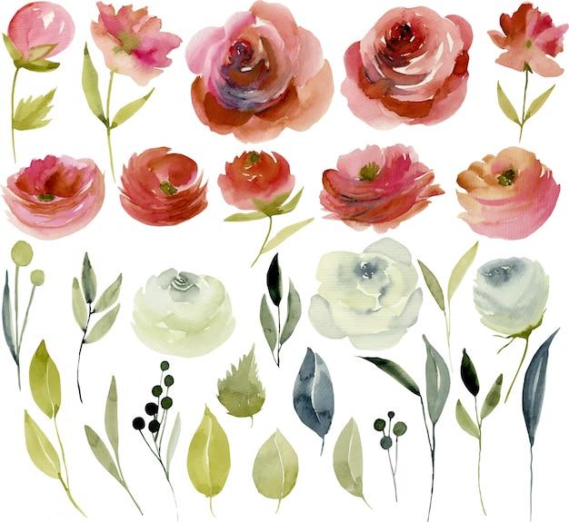 Coleção de aquarela borgonha e rosas brancas