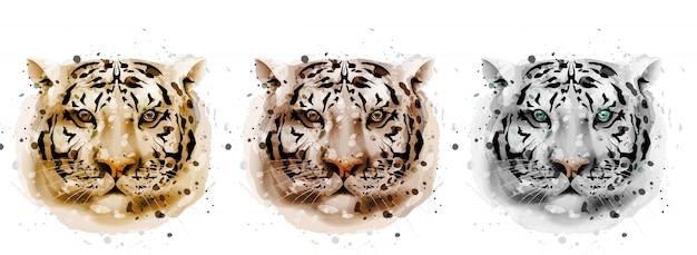 Coleção de aquarela de tigres
