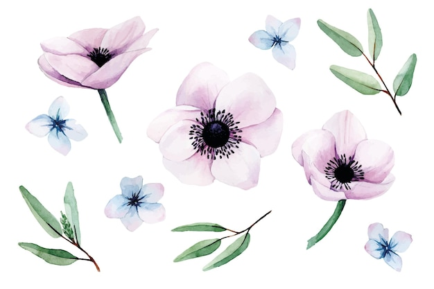 Coleção de aquarela definida com flores de anêmonas rosa, folhas de eucalipto e flores de hortênsia azuis