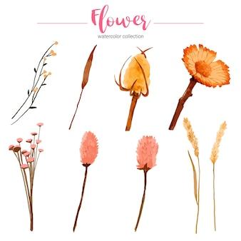 Coleção de aquarela linda flor Vetor grátis