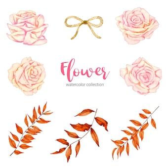 Coleção de aquarela linda flor