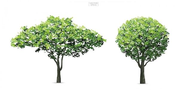 Coleção de árvore isolada no fundo branco.