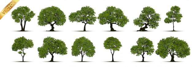 Coleção de árvore