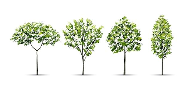 Coleção de árvore.