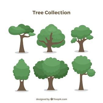 Coleção de árvores com espécies diferentes