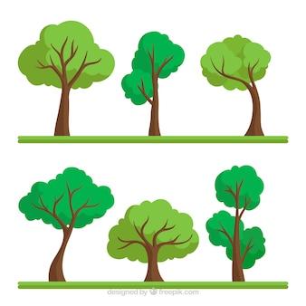 Coleção de árvores em estilo plano