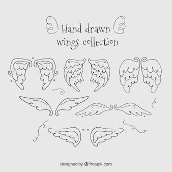 Coleção de asas desenhadas mão
