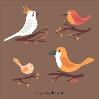 Coleção de aves de mão desenhada