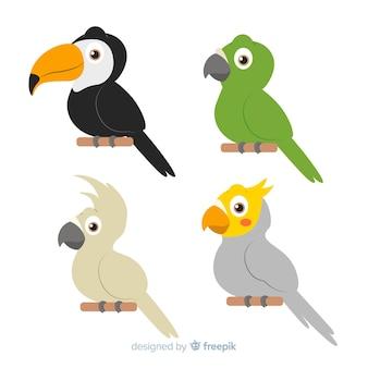 Coleção de aves exóticas design plano