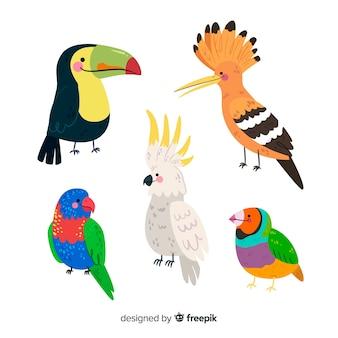 Coleção de aves planas exóticas