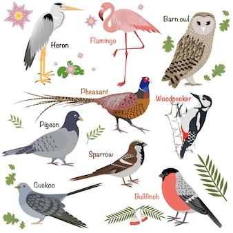 Coleção de aves realista. coruja de celeiro e garça-real, dom-fafe e faisão, pica-pau e flamingo.