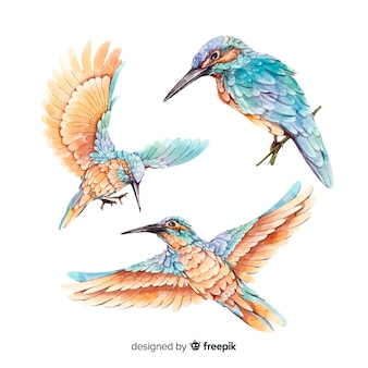 Coleção de aves realistas em aquarela