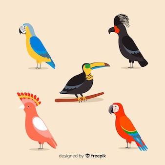 Coleção de aves selvagens tropicais exóticas