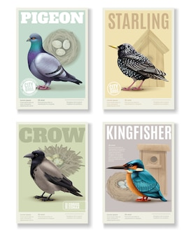 Coleção de banners de pássaros com quatro banners verticais retangulares imagens coloridas de vários pássaros e texto editável