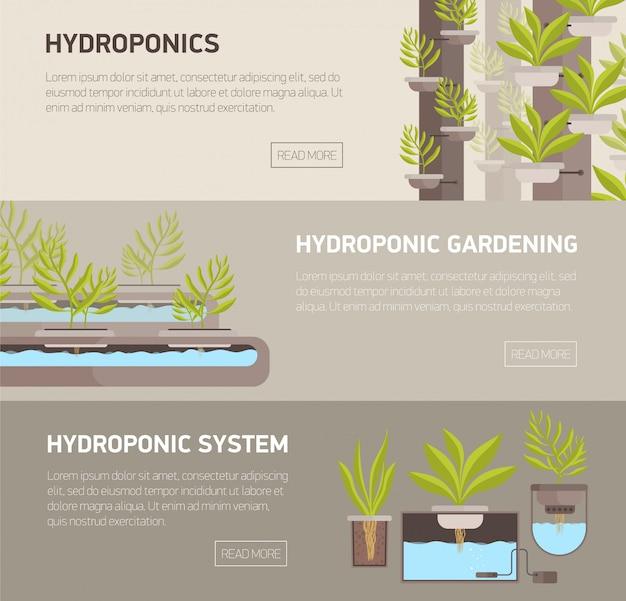 Coleção de banners web com plantas que crescem em vasos com solução mineral e lugar para texto.