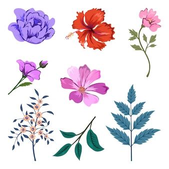 Coleção de belas ervas e flores silvestres e folhas isoladas.