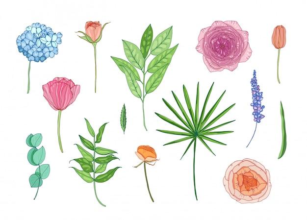 Coleção de belas flores no jardim e folhas - hortensia, ranúnculo, rosa, lavanda, eucalipto.