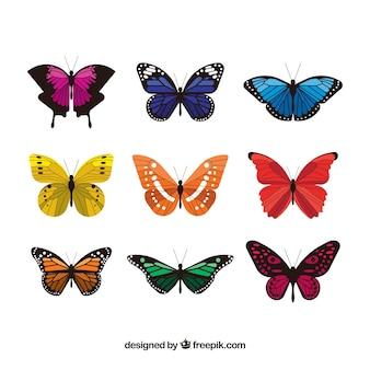 Coleção de borboletas coloridas elegantes