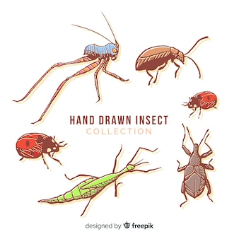 Coleção de bug colorido mão desenhada