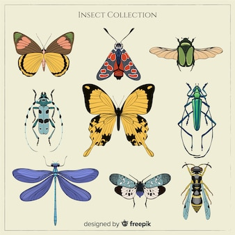 Coleção de bugs coloridos realistas